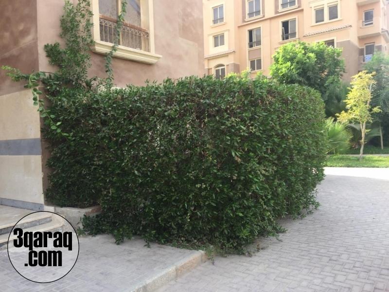 شقة للبيع في كمبوند الحي الايطالي حدائق اكتوبر 80م