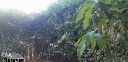بحديقة خاصة حى الاشجار